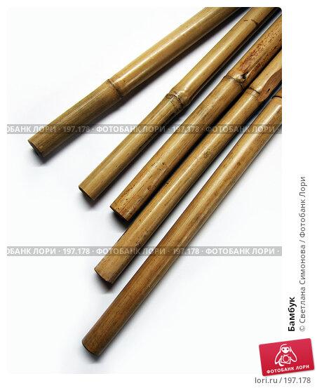 Бамбук, фото № 197178, снято 15 января 2008 г. (c) Светлана Симонова / Фотобанк Лори