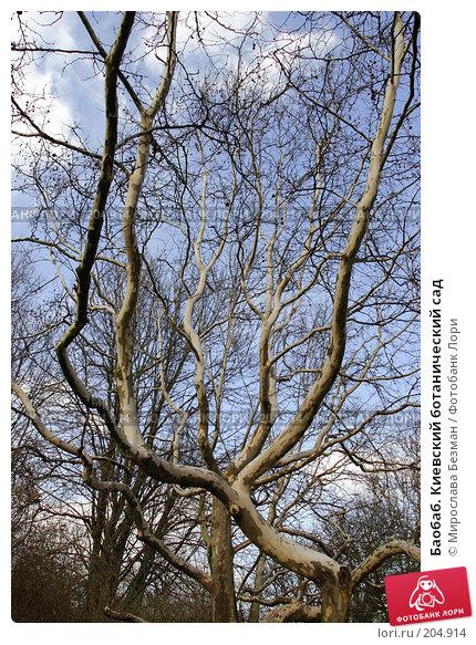 Баобаб. Киевский ботанический сад, фото № 204914, снято 12 апреля 2007 г. (c) Мирослава Безман / Фотобанк Лори