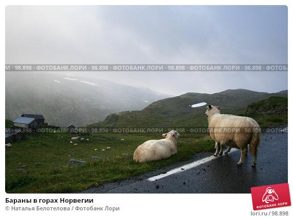 Бараны в горах Норвегии, фото № 98898, снято 29 августа 2007 г. (c) Наталья Белотелова / Фотобанк Лори