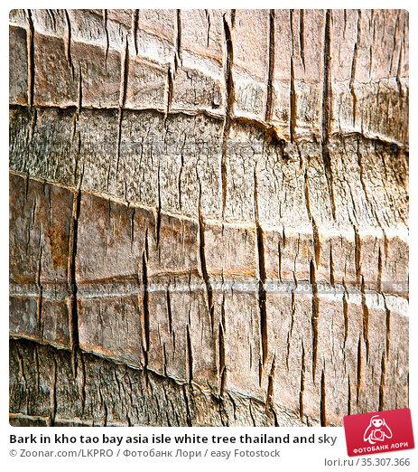 Bark in kho tao bay asia isle white tree thailand and sky. Стоковое фото, фотограф Zoonar.com/LKPRO / easy Fotostock / Фотобанк Лори