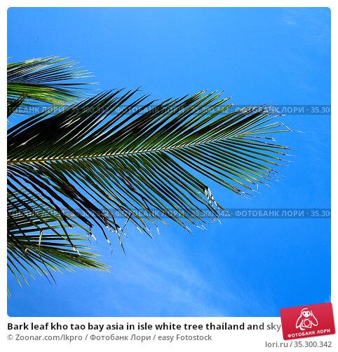 Bark leaf kho tao bay asia in isle white tree thailand and sky. Стоковое фото, фотограф Zoonar.com/lkpro / easy Fotostock / Фотобанк Лори
