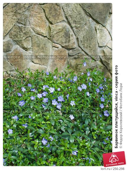 Купить «Барвинок плетущийся, vinca - серия фото», фото № 250298, снято 12 апреля 2008 г. (c) Федор Королевский / Фотобанк Лори