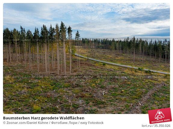 Baumsterben Harz gerodete Waldflächen. Стоковое фото, фотограф Zoonar.com/Daniel Kühne / easy Fotostock / Фотобанк Лори