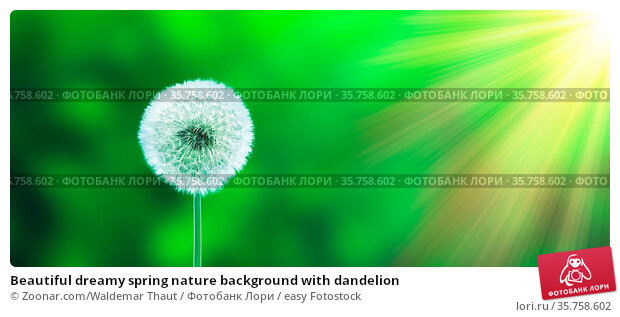 Beautiful dreamy spring nature background with dandelion. Стоковое фото, фотограф Zoonar.com/Waldemar Thaut / easy Fotostock / Фотобанк Лори