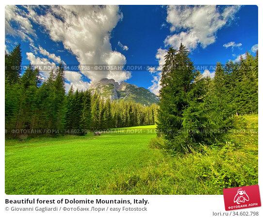 Beautiful forest of Dolomite Mountains, Italy. Стоковое фото, фотограф Giovanni Gagliardi / easy Fotostock / Фотобанк Лори