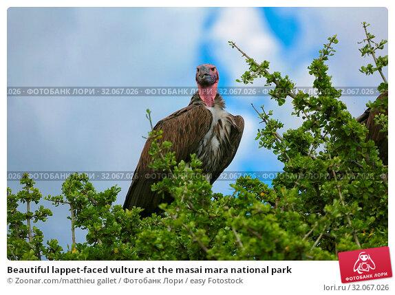 Beautiful lappet-faced vulture at the masai mara national park. Стоковое фото, фотограф Zoonar.com/matthieu gallet / easy Fotostock / Фотобанк Лори