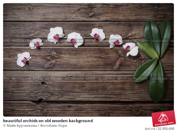 beautiful orchids on old wooden background. Стоковое фото, фотограф Майя Крученкова / Фотобанк Лори