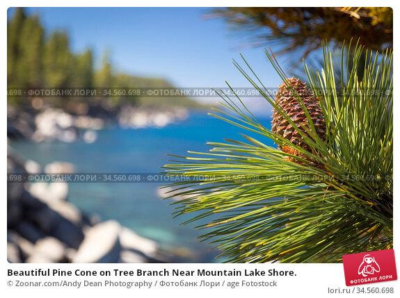Beautiful Pine Cone on Tree Branch Near Mountain Lake Shore. Стоковое фото, фотограф Zoonar.com/Andy Dean Photography / age Fotostock / Фотобанк Лори