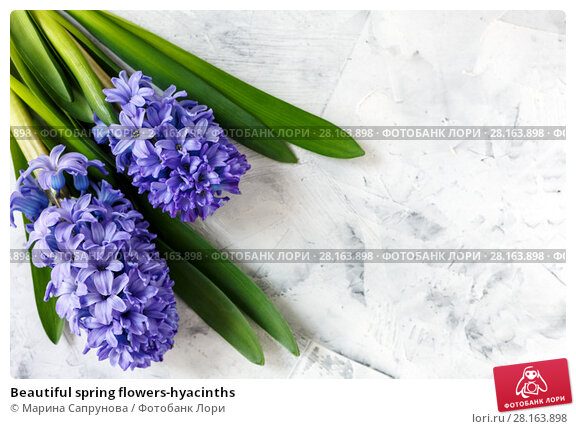 Купить «Beautiful spring flowers-hyacinths», фото № 28163898, снято 12 марта 2018 г. (c) Марина Сапрунова / Фотобанк Лори