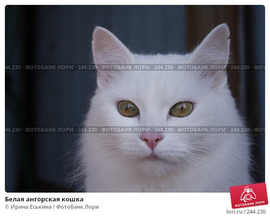 Белая ангорская кошка, фото № 244230, снято 5 апреля 2008 г. (c) Ирина Еськина / Фотобанк Лори