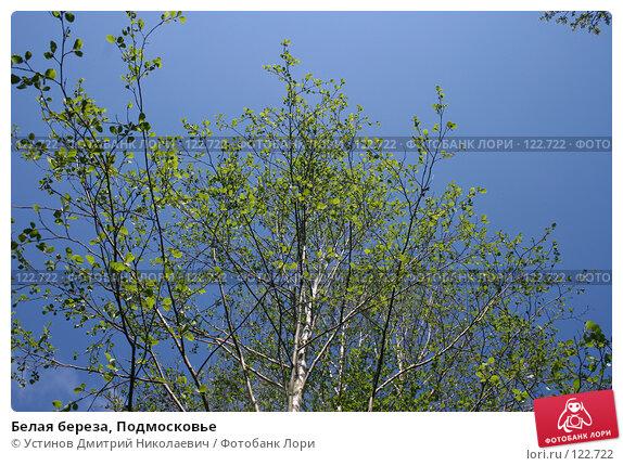Белая береза, Подмосковье, фото № 122722, снято 20 мая 2007 г. (c) Устинов Дмитрий Николаевич / Фотобанк Лори