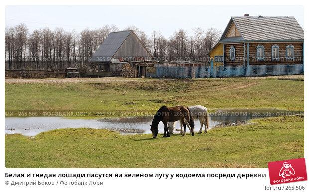 Белая и гнедая лошади пасутся на зеленом лугу у водоема посреди деревни, фото № 265506, снято 20 апреля 2008 г. (c) Дмитрий Боков / Фотобанк Лори