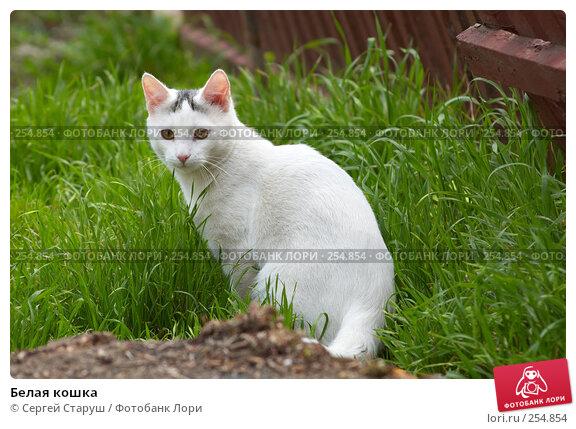 Белая кошка, фото № 254854, снято 12 апреля 2008 г. (c) Сергей Старуш / Фотобанк Лори