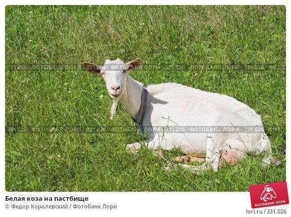 Купить «Белая коза на пастбище», фото № 331026, снято 22 июня 2008 г. (c) Федор Королевский / Фотобанк Лори