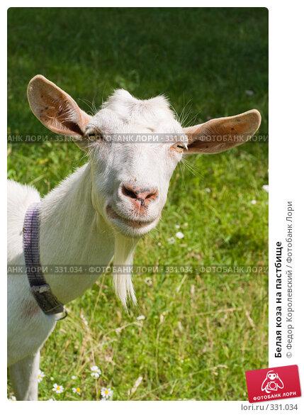 Купить «Белая коза на пастбище», фото № 331034, снято 22 июня 2008 г. (c) Федор Королевский / Фотобанк Лори