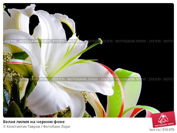 Белая лилия на черном фоне, фото № 319970, снято 13 июля 2007 г. (c) Константин Тавров / Фотобанк Лори