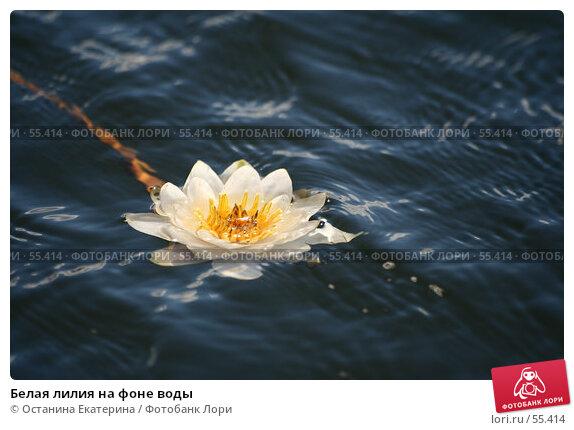Белая лилия на фоне воды, фото № 55414, снято 24 июня 2007 г. (c) Останина Екатерина / Фотобанк Лори