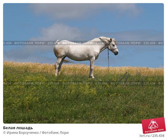 Белая лошадь, фото № 235434, снято 20 июня 2007 г. (c) Ирина Борсученко / Фотобанк Лори