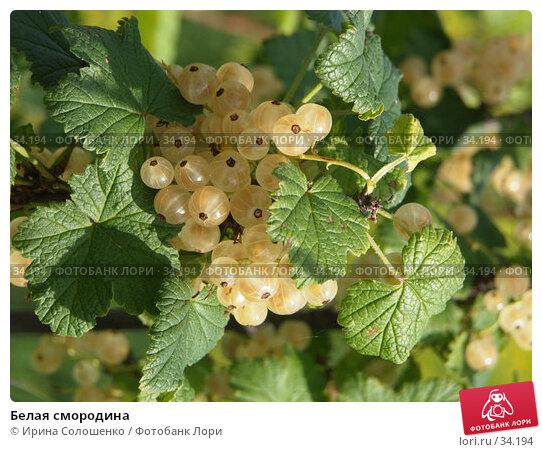 Купить «Белая смородина», фото № 34194, снято 1 августа 2006 г. (c) Ирина Солошенко / Фотобанк Лори