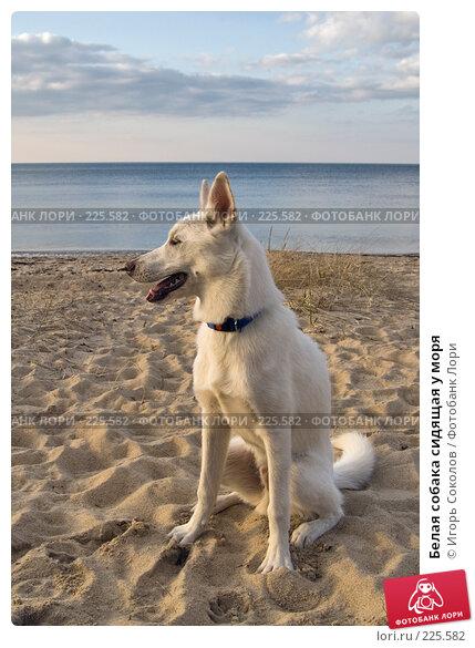 Купить «Белая собака сидящая у моря», фото № 225582, снято 11 марта 2008 г. (c) Игорь Соколов / Фотобанк Лори