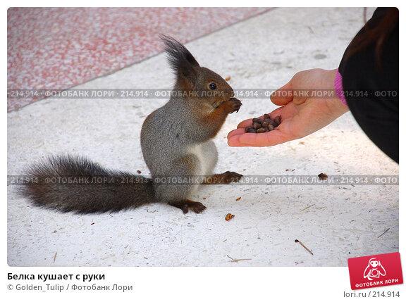 Белка кушает с руки, фото № 214914, снято 13 января 2008 г. (c) Golden_Tulip / Фотобанк Лори