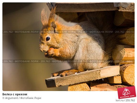 Купить «Белка с орехом», фото № 255762, снято 5 апреля 2008 г. (c) Argument / Фотобанк Лори