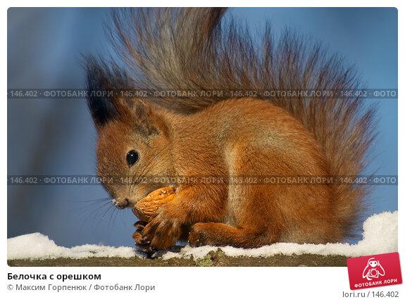 Купить «Белочка с орешком», фото № 146402, снято 28 февраля 2006 г. (c) Максим Горпенюк / Фотобанк Лори