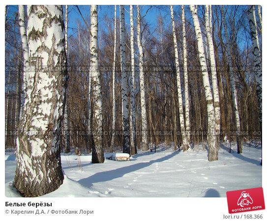 Белые берёзы, фото № 168366, снято 5 января 2008 г. (c) Карелин Д.А. / Фотобанк Лори