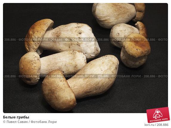 Белые грибы, фото № 208886, снято 27 октября 2016 г. (c) Павел Савин / Фотобанк Лори