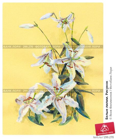Белые лилии. Рисунок, фото № 299270, снято 25 марта 2017 г. (c) Яков Филимонов / Фотобанк Лори