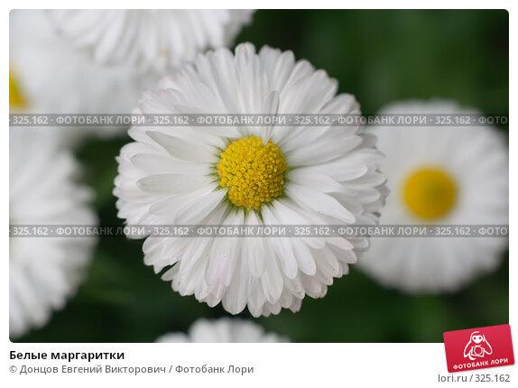 Белые маргаритки, фото № 325162, снято 16 июня 2008 г. (c) Донцов Евгений Викторович / Фотобанк Лори