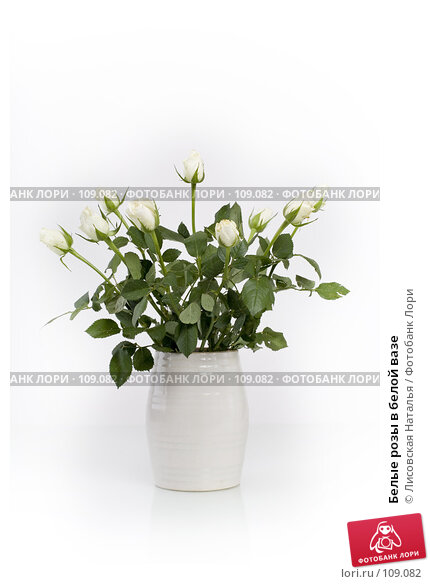 Белые розы в белой вазе, фото № 109082, снято 1 ноября 2007 г. (c) Лисовская Наталья / Фотобанк Лори