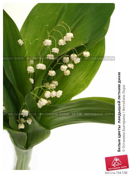 Купить «Белые цветы  ландышей летним днем», фото № 54138, снято 3 июня 2007 г. (c) Останина Екатерина / Фотобанк Лори