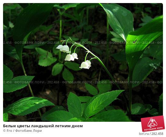 Белые цветы ландышей летним днем, фото № 282458, снято 29 мая 2005 г. (c) Fro / Фотобанк Лори