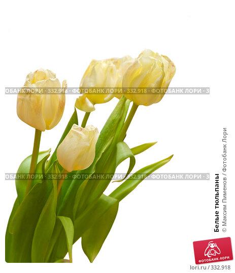 Белые тюльпаны, фото № 332918, снято 9 марта 2008 г. (c) Максим Пименов / Фотобанк Лори