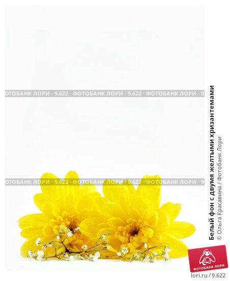 Белый фон с двумя желтыми хризантемами, фото № 9622, снято 29 июня 2006 г. (c) Ольга Красавина / Фотобанк Лори