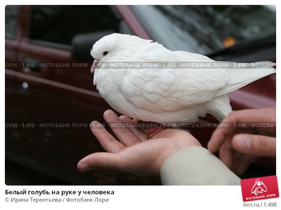 Белый голубь на руке у человека, фото № 1498, снято 8 октября 2005 г. (c) Ирина Терентьева / Фотобанк Лори