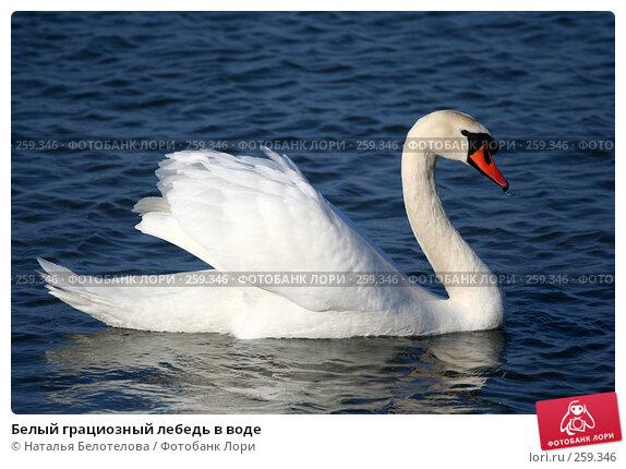 Белый грациозный лебедь в воде, фото № 259346, снято 29 марта 2008 г. (c) Наталья Белотелова / Фотобанк Лори