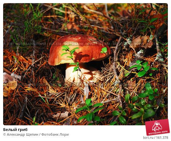 Белый гриб, эксклюзивное фото № 161378, снято 7 октября 2007 г. (c) Александр Щепин / Фотобанк Лори