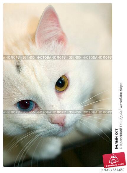 Белый кот, фото № 334650, снято 8 января 2004 г. (c) Кравецкий Геннадий / Фотобанк Лори