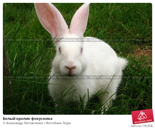 Белый кролик фокусника, фото № 19974, снято 21 июля 2006 г. (c) Александр Литовченко / Фотобанк Лори