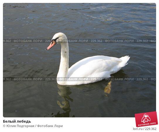 Белый лебедь, фото № 229362, снято 20 марта 2008 г. (c) Юлия Селезнева / Фотобанк Лори