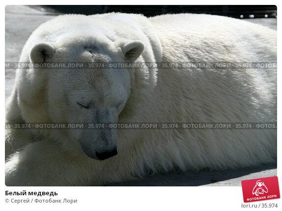 Купить «Белый медведь», фото № 35974, снято 10 апреля 2007 г. (c) Сергей / Фотобанк Лори