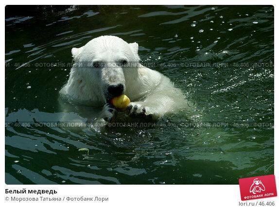 Белый медведь, фото № 46406, снято 9 июля 2005 г. (c) Морозова Татьяна / Фотобанк Лори