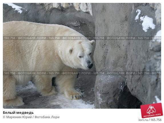 Купить «Белый медведь», фото № 165758, снято 15 декабря 2007 г. (c) Марюнин Юрий / Фотобанк Лори