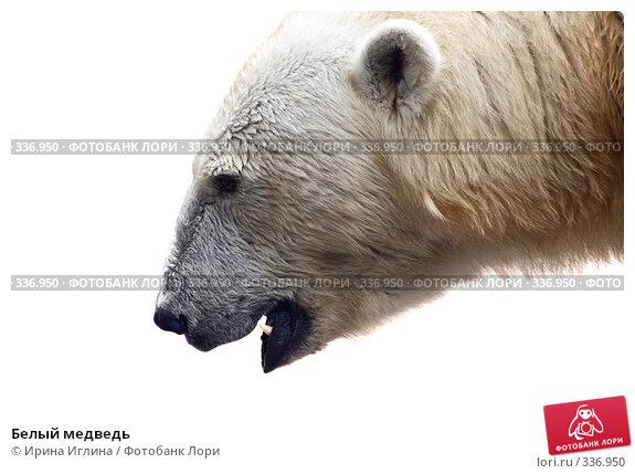 Белый медведь, фото № 336950, снято 21 июня 2008 г. (c) Ирина Иглина / Фотобанк Лори