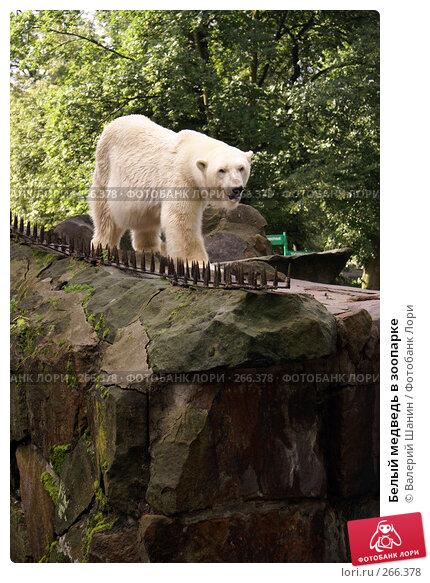 Белый медведь в зоопарке, фото № 266378, снято 31 июля 2007 г. (c) Валерий Шанин / Фотобанк Лори