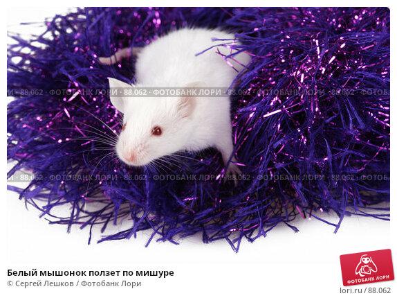 Купить «Белый мышонок ползет по мишуре», фото № 88062, снято 23 сентября 2007 г. (c) Сергей Лешков / Фотобанк Лори