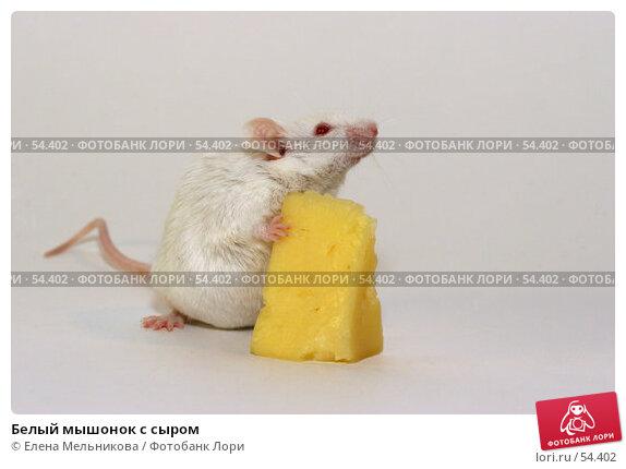 Белый мышонок с сыром, фото № 54402, снято 21 апреля 2007 г. (c) Елена Мельникова / Фотобанк Лори