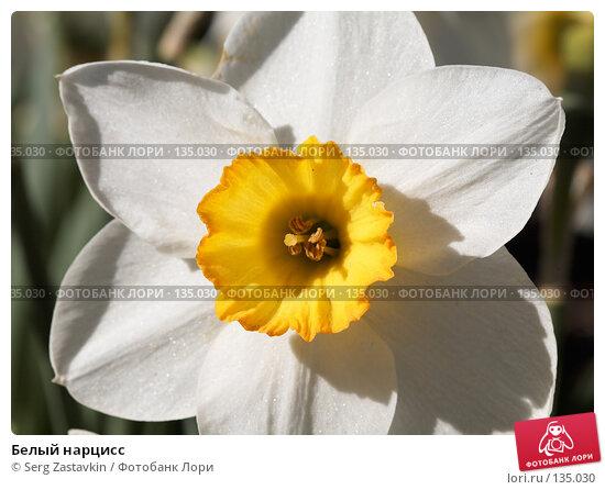 Белый нарцисс, фото № 135030, снято 31 мая 2006 г. (c) Serg Zastavkin / Фотобанк Лори
